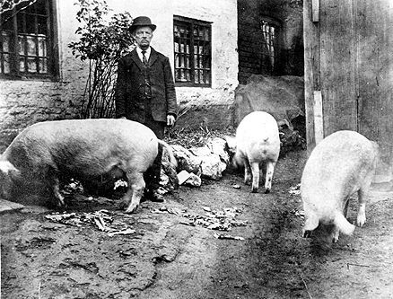 Richard Pearson, son of James Pearson, stands outside in the yard at the back of the Radford Marsh property with three of the household's pigs for company.  Photograph courtesy of Lance Wright.
